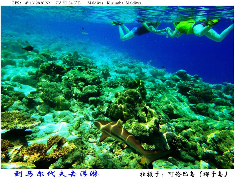 08 马代浮潜-s.jpg