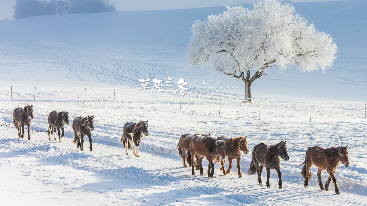 乌兰布统草原之冬720-20.jpg