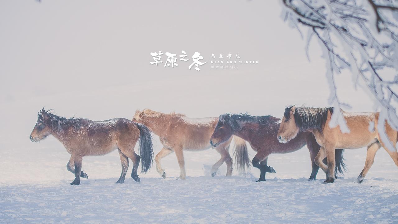 乌兰布统草原之冬720-21.jpg