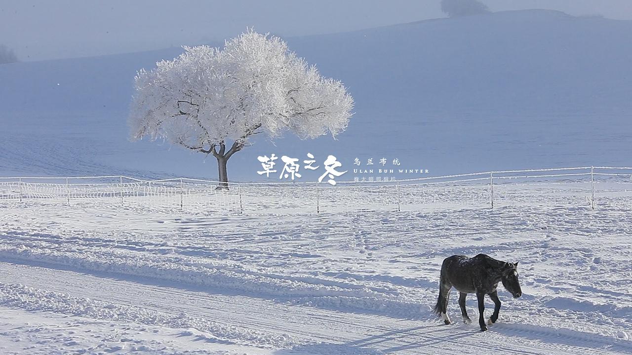 乌兰布统草原之冬720-30.jpg