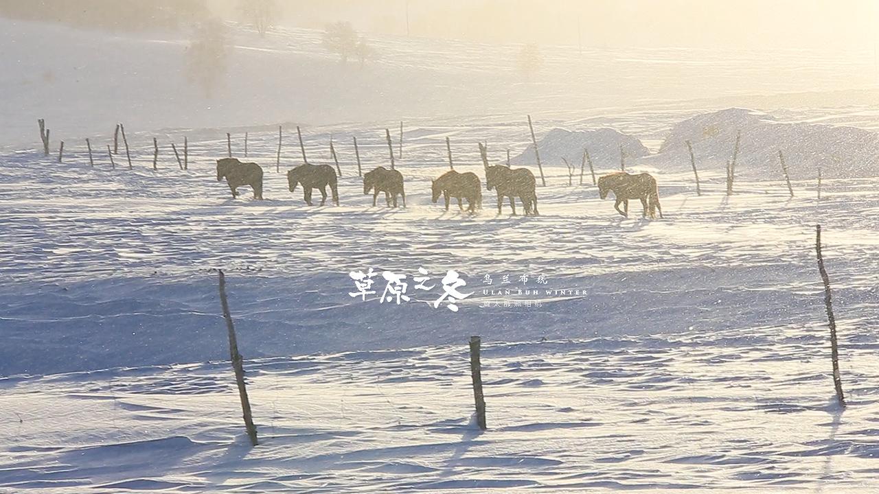 乌兰布统草原之冬720-31.jpg
