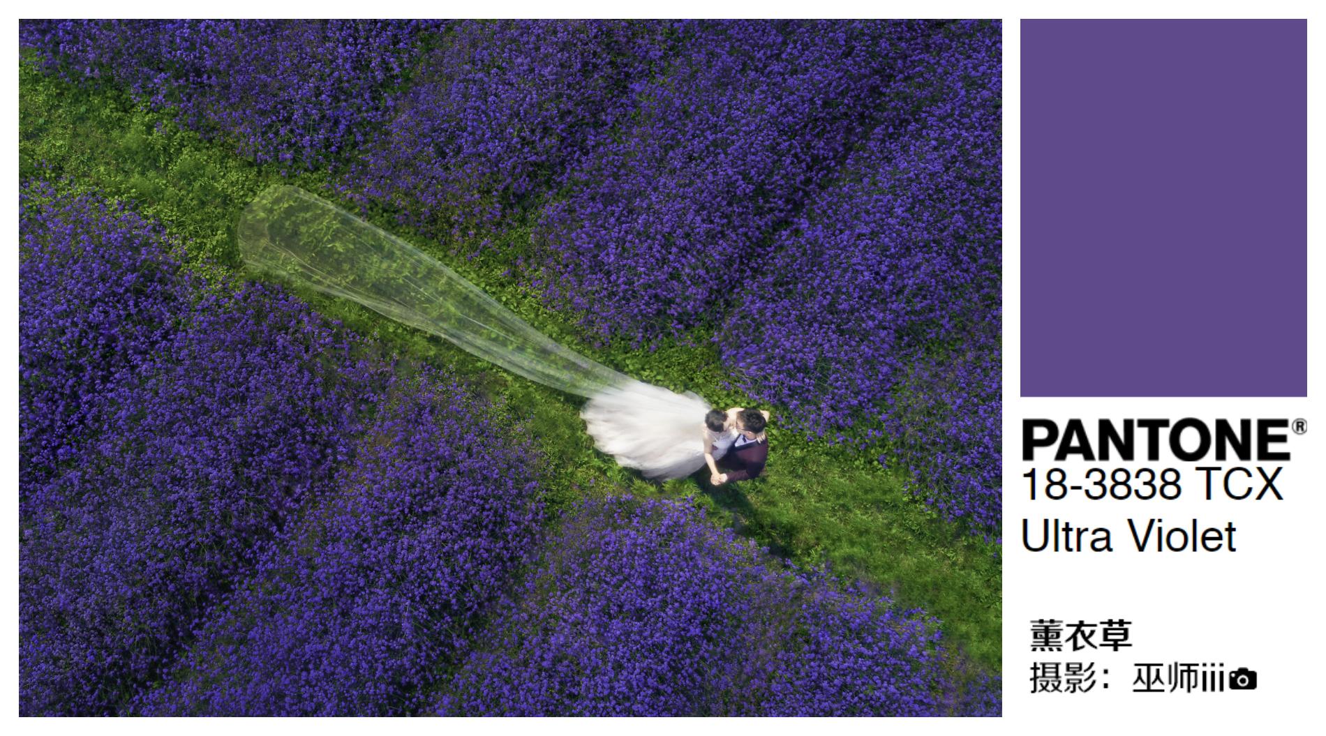 紫拼 (1).jpg